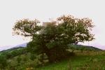 l'arbre à la cabane 1997